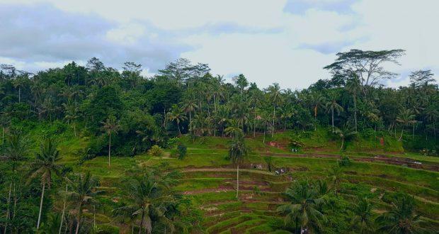 Indahnya Terasering Sawah di Tegalalang Ubud Bali (Photo: Vera H/ Beritadaerah)