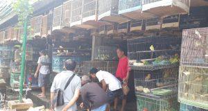 Pasar Burung Bali